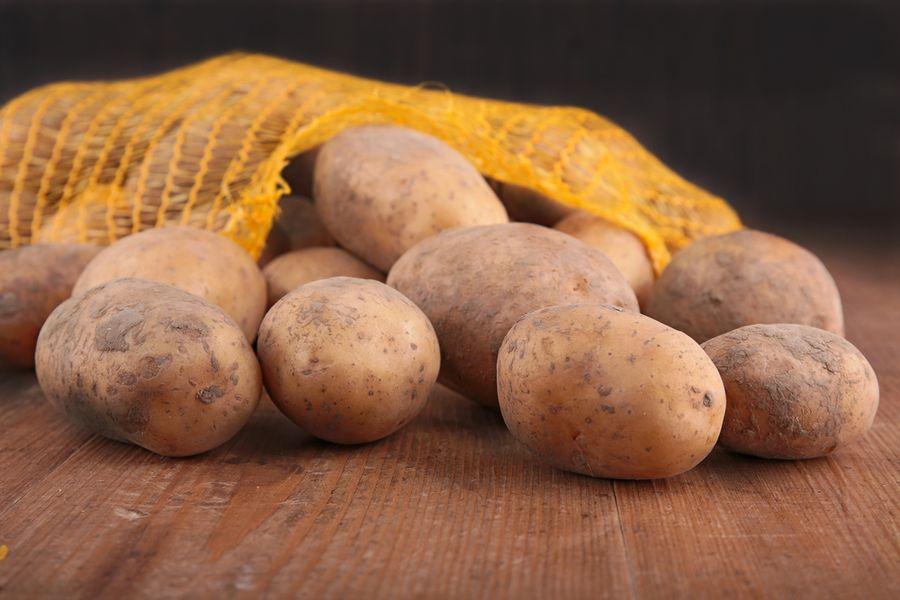 картофель удача сорта