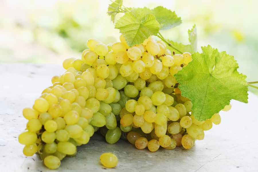 сорта винограда кишмиш