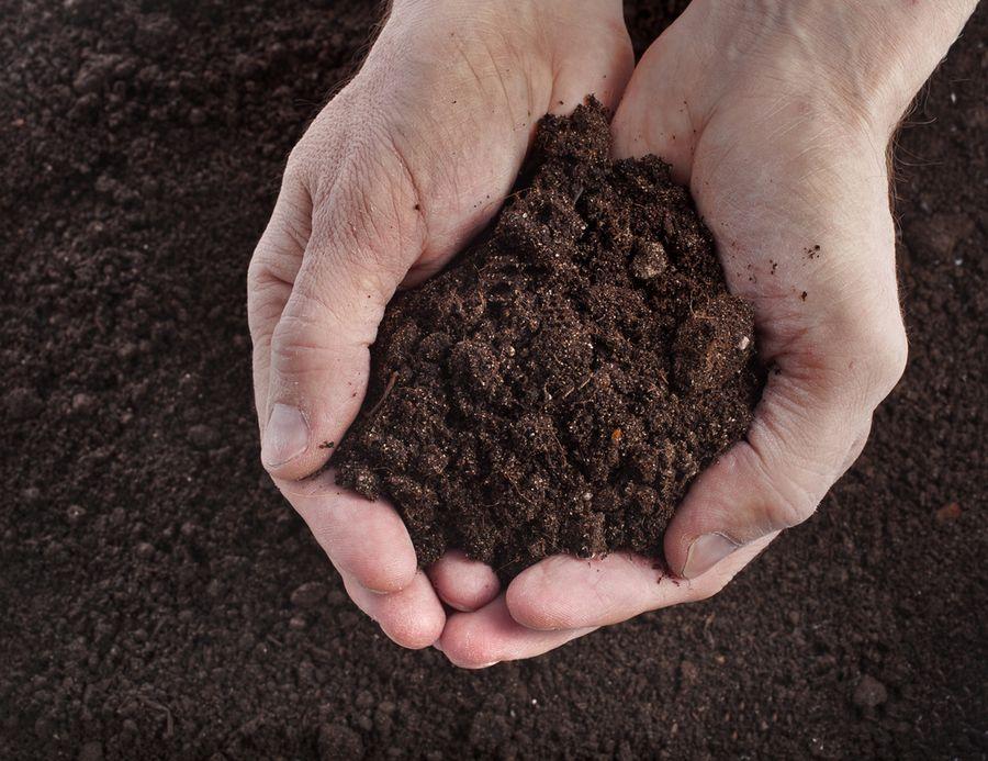 почва для рассады