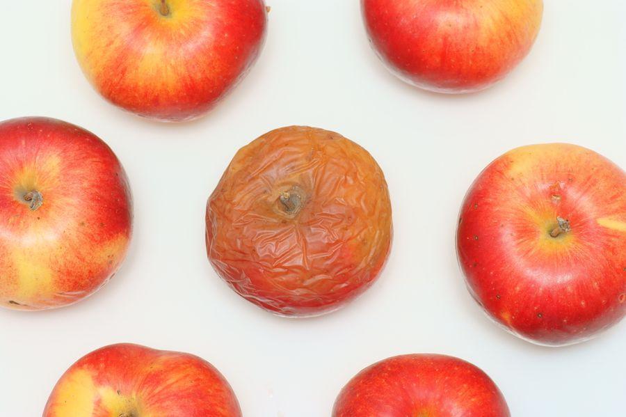 парша на яблоне