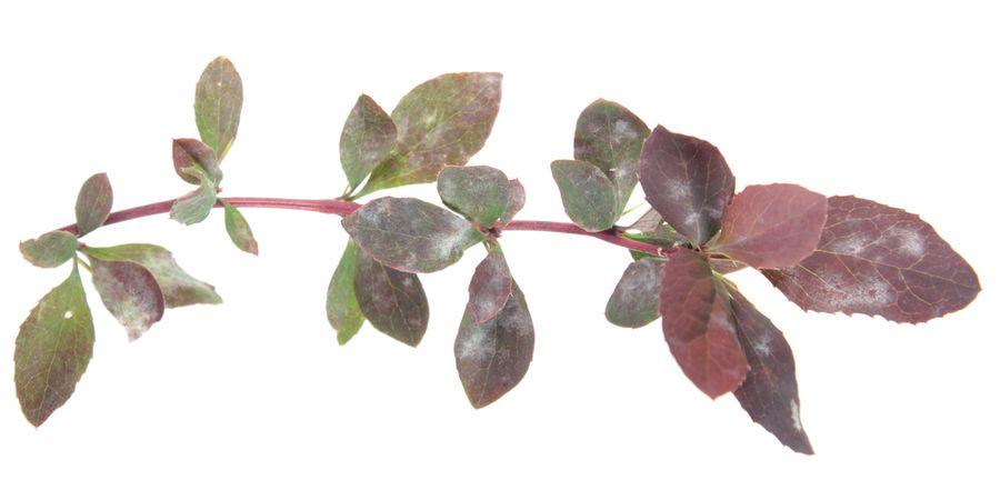 как бороться с болезнями комнатных растений