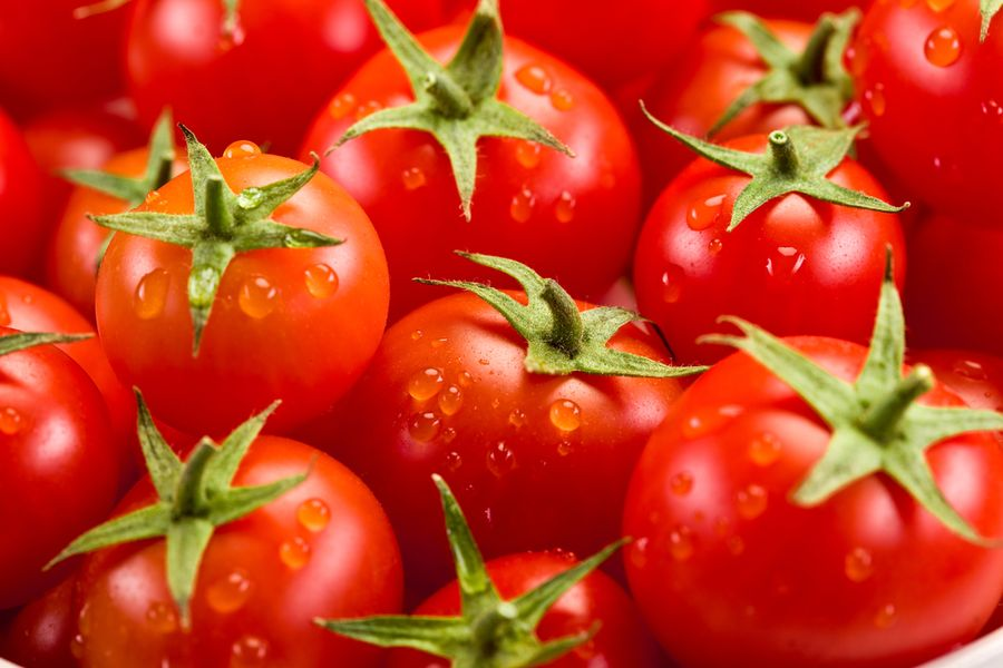 урожайные томаты