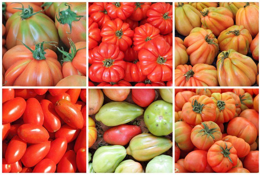 гибриды томатов