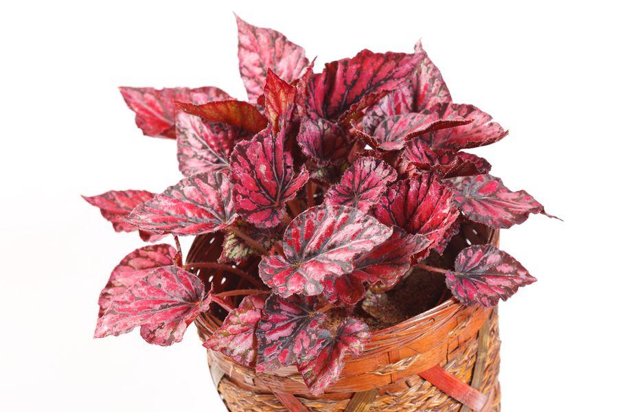 мелкие комнатные растения