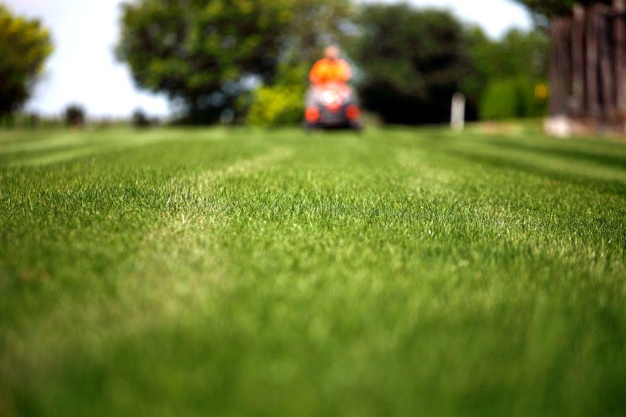 какой газон лучше посадить