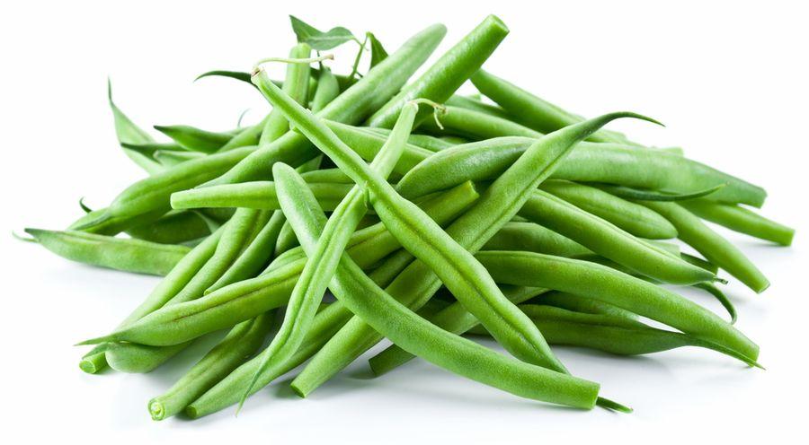 фасоль растение