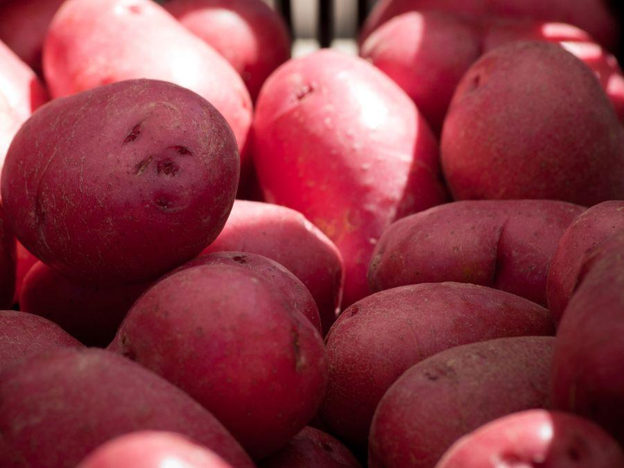 картофель скарлет