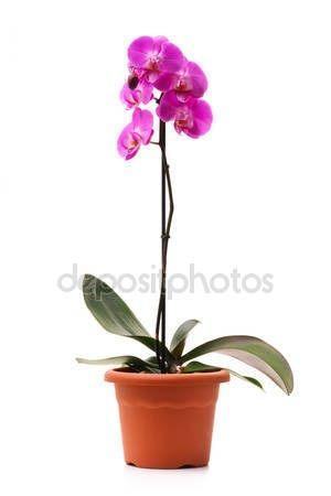 орхидеи уход в домашних условиях