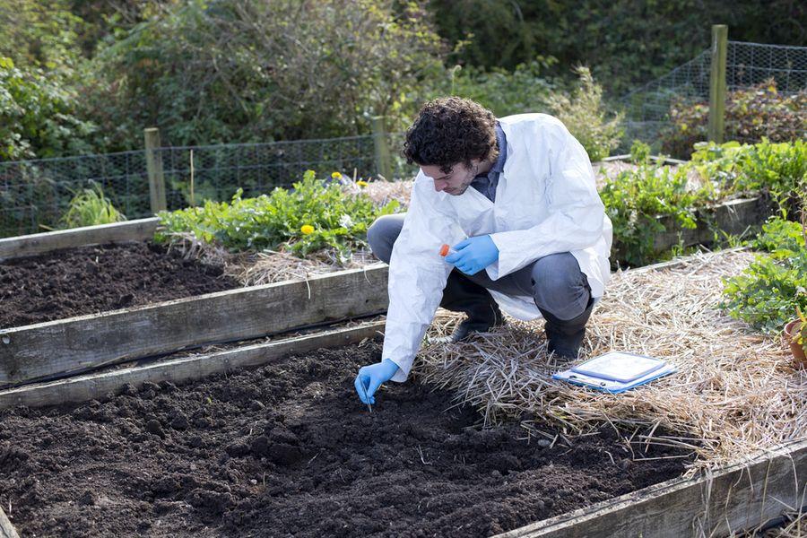 кислая почва