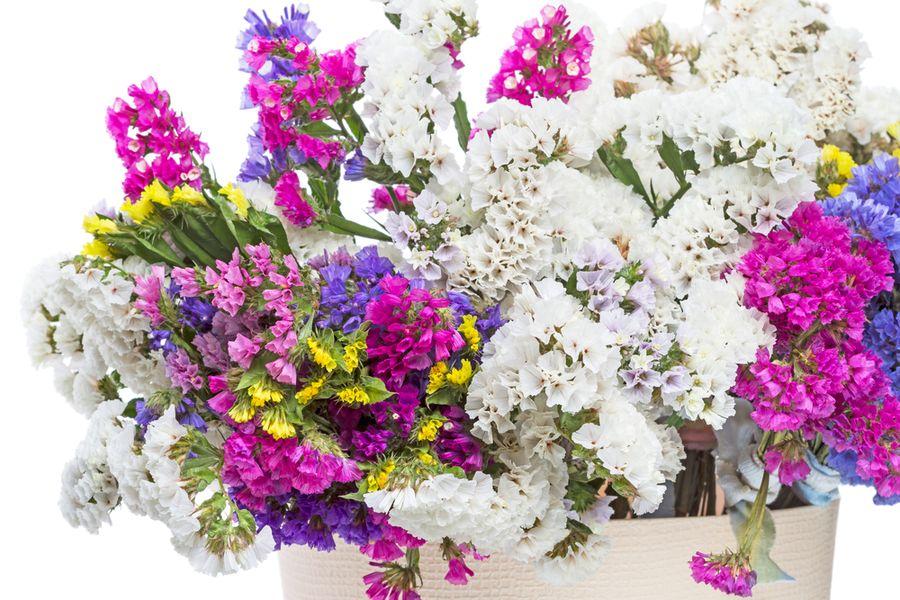 цветы статица